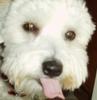 ochi_pia_brochi userpic