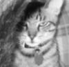 queenmargot userpic
