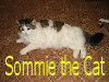 sommie_the_cat userpic
