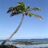 hawaiiannights userpic