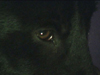 deltachaos userpic