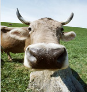 downercow userpic