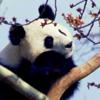 panda_hideyoshi userpic