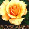 roseambr userpic