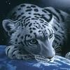 zolok userpic