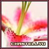 chantellyo userpic