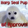 Seal Pup of Approval