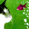 claudiacurio userpic