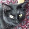 Sanju Devil Cat