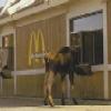 McDonald's Moose