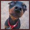 hawk_puppy userpic