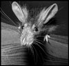 gray_mouse userpic
