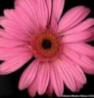 nene1115h6 userpic