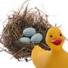 тип: гнездо обыкновенное