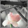 wanderingxmind userpic