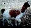chinchillama userpic