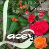 roses 'n' lace--shusu