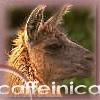 caffeinica userpic