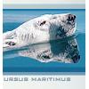 ursus maritimusinfinitemonkeys