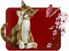 kittycallicoe userpic