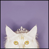 contents under pressure / handle with care: cats - tiara