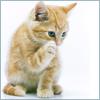 Mrs. Christie: orange kitten