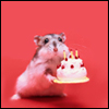 contents under pressure / handle with care: hamsters - cake