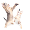 contents under pressure / handle with care: cats - dancing keetans