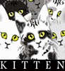 Viridian5: Kitten (Mew)