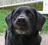 good_dog_carl userpic