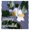 Simply Splendid: Living Large on Less