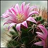 cvetok_kaktusa userpic