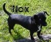Nox - Standing