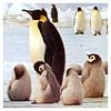 Nomi: penguin_chevruta (rjcardinal)