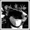 xeillseyant userpic