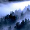 arliss: redwoods mist