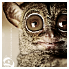 aieramontie userpic
