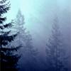 arliss: doug firs fog