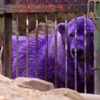 a purple polar beh