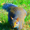 Contrast Squirrel
