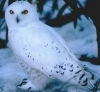hopeowl userpic