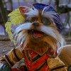 sirdidymuss userpic
