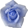 r_is_for_rose userpic