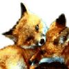 Cuddly Foxies