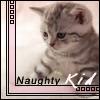 disgruntalkitty userpic