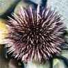 merisiili userpic