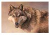 gentleman_wolf userpic