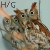 H-G owls