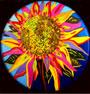 Blodwedden: flowers