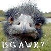 candiedangel userpic